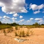 Národní park Kruger - scenérie